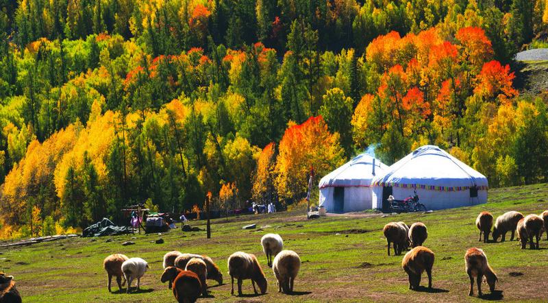 洁白的蒙古包,住满了慢慢的草原回忆